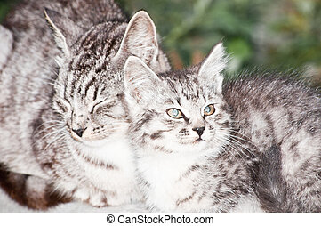 cat and kitten - wild cat with a small kitten in the street