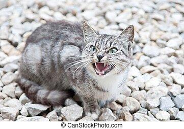 wildcat - wild predatory cat warns danger