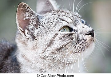young wild cat - young beautiful wild cat sitting