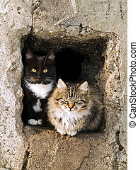 cats - outdoor cats look out from the hole in sunny day
