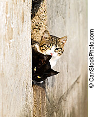 Two outdoor cat looking out of the aperture in the wall