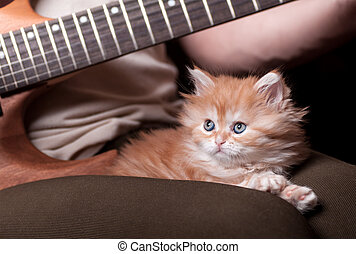 kitten lays on man's lap who playing a guitar