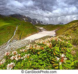 Caucasus, Bjerge, Enge,  Alpine