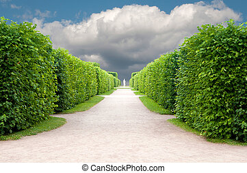 alley in the Park with exactly topiary trees