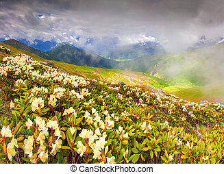 Alpine meadows in the Caucasus mountains Upper Svaneti,...