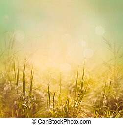 Spring background - Spring or summer abstract nature...