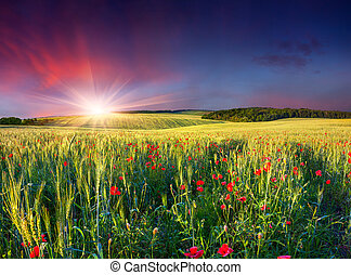 Wheat and poppies field at sunset