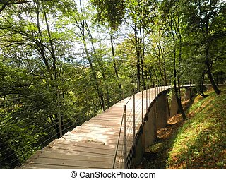 Elevated Trail in Forest