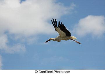 Cigüeña, vuelo