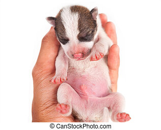 Puppy Dog - puppy dog with hand isolated on white background