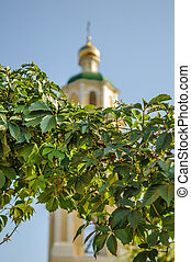 Grapes on the background of the church