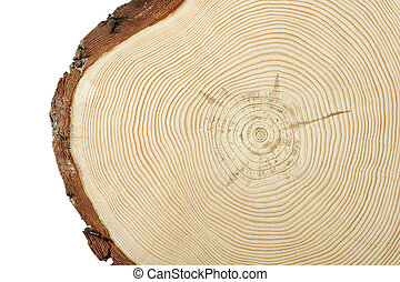 Wood cross section - Circular wood cross section with curved...