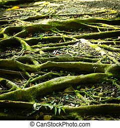 Tree Roots - Close up Tree Roots background
