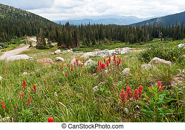 Wildflowers Blooming in the Colorado Mountains