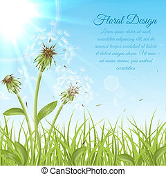 White dandelions on green grass with summer sun background...