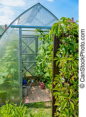 arched greenhouse - the arch of the greenhouse tomato...