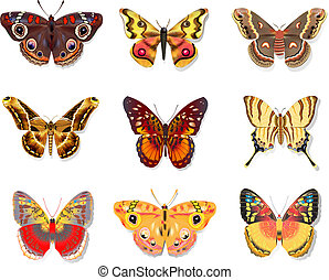 set beautiful butterfly on white background