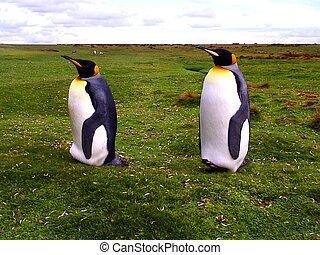 國王, 企鵝, 二
