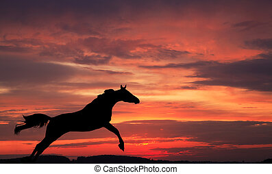Silhouette of a horse in a jump against the sky on a sunset