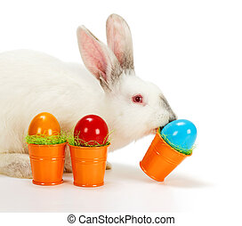 White rabbit carrying Easter eggs - White rabbit carrying...
