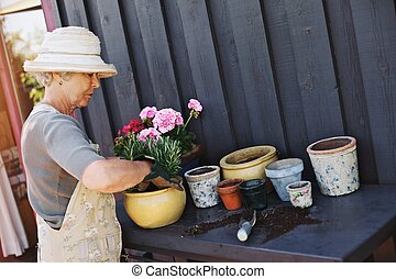 Active senior woman planting new plants in terracotta pots -...