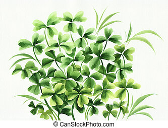 Irish clover - Composition of green irish clover and grass...