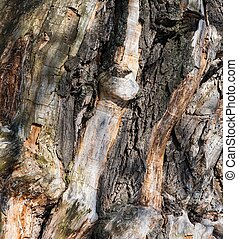 background gnarled tree - background gnarled trunk of an old...