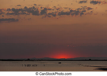 nightfall in Camargue, Provence, France