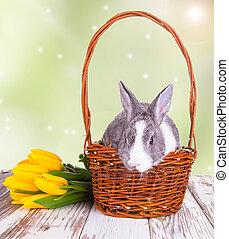 Easter rabbit - Easter baby rabbit in basket on natute...