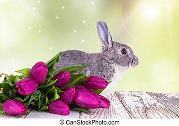 Easter rabbit - Easter baby rabbit on natute background