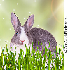 Easter rabbit - Easter baby rabbit with green grass on...
