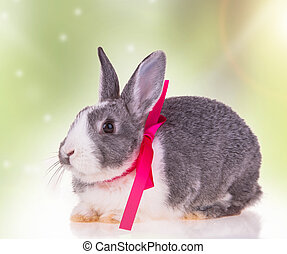 Easter rabbit - Easter baby rabbit on natute background