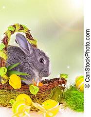 Easter rabbit - Easter baby rabbit in basket on natute...