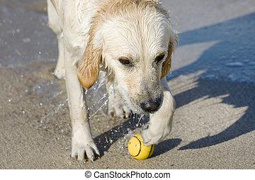Dog retrieving a ball on the beach