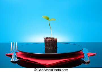 One green fresh sprout in plate with water - One green fresh...