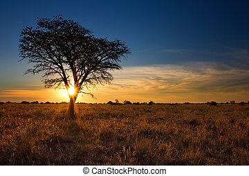 Lovely sunset in Kalahari with dead tree