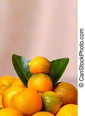 Calamondin citrus fruits and green leaves, close up