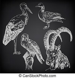digital drawing of stork, falcon, goose and goat on black...
