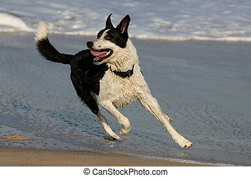 Dog at the Beach - Pet dog playing in the sea water at the...