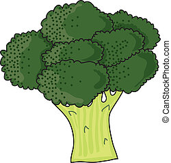 Brocolli - A bunch of green, leafy brocolli on a white...
