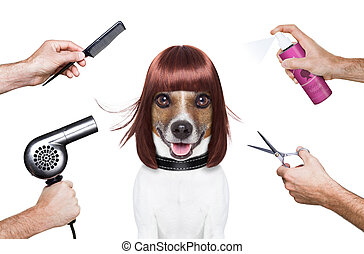 hairdresser dog ready to look beautiful at the spa