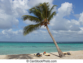 Caribbean Beach, Dominican Republic - Caribbean Beach with...