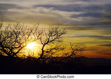 unset Chiricahua National Monument - Sunset through Mesquite...