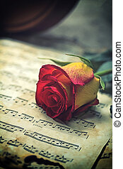 Violin sheet music and rose black composition still life...