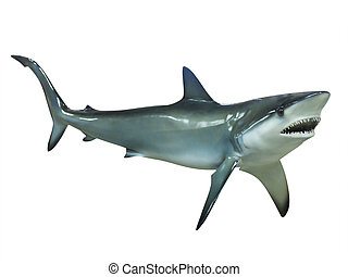 Shark, isolated - Shark on a white background, isolated