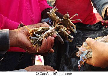 caranguejos, Cozinhar, fresco, vivo