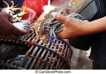 azul, caranguejos, mercado, fresco