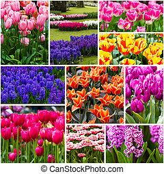 bonito, primavera, flores