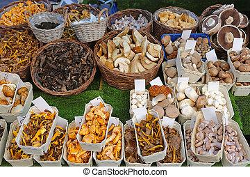 Edible mushrooms variety at farmers market
