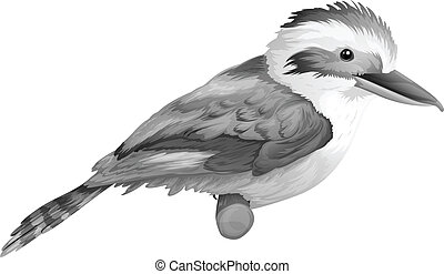 A kookaburra - Illustration of a kookaburra on a white...